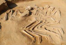 Photo of متحدہ عرب امارات میں 6000 سال قبل مسیح کے انسانی کنکال دریافت ہوئے